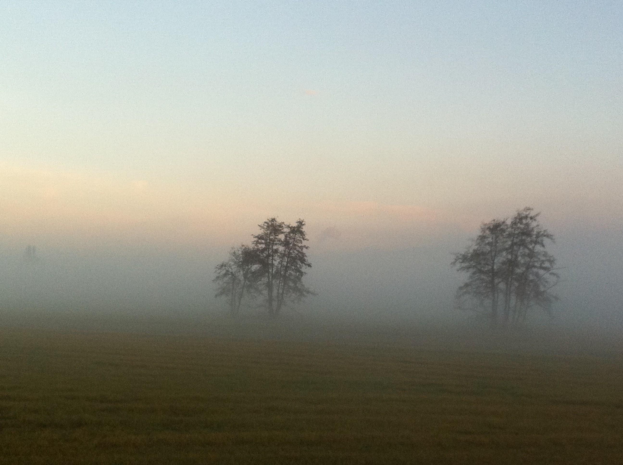 Mist vangt de bomen